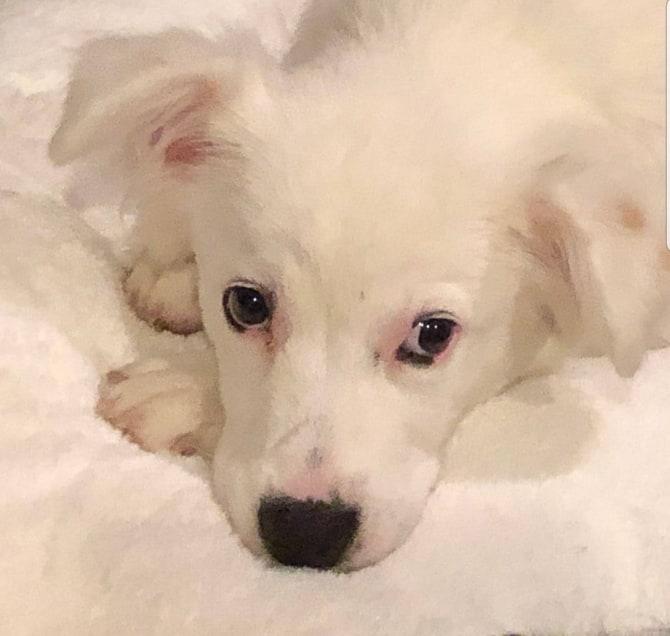Pearl Dog Rescue
